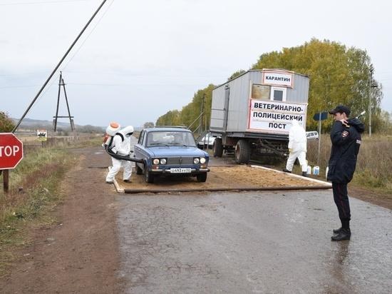 Заболевший ящуром башкирский скот заразили овцы из Средней Азии