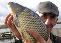 На безрыбье и брак — рыба. Как обманывают покупателей морских и речных деликатесов